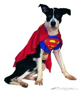 kostuem-superman-hund