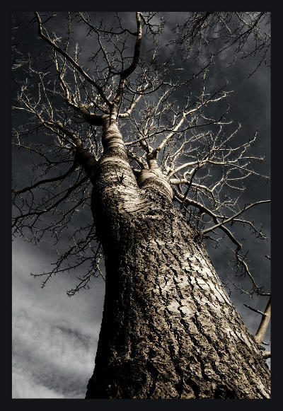 nidhoeggr-yggdrasil, by icelandic, Flickr